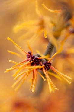 beautiful petals flora