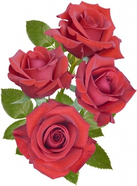 Beautiful Red Roses 04 Hd Picture