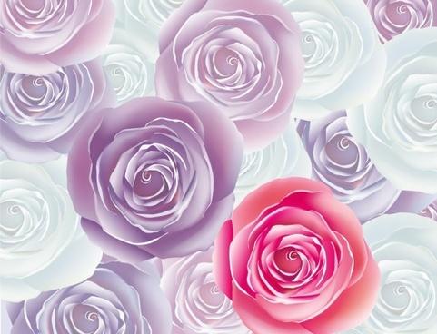 beautiful roses 01 vector