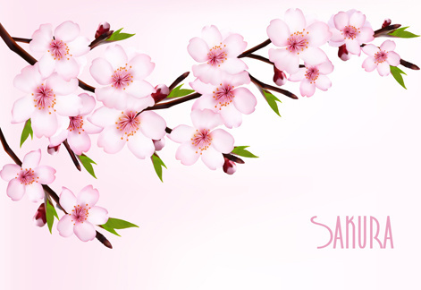beautiful sakura vector background graphics