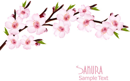 sakura free vector download 47 free vector for commercial use rh all free download com cherry blossom graphics images cherry blossom graphic design