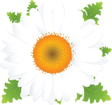 beautiful small flowers vector 2