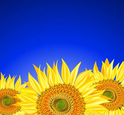 beautiful sunflowers background vector