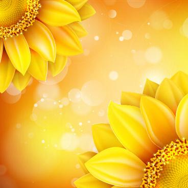 beautiful sunflowers golden background set vector
