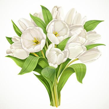 beautiful white tulips vector