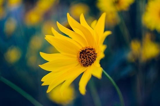 bee bloom blossom blur color dof fleur flora