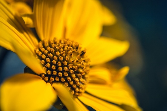 bee bloom blossom bug closeup dof fleur flora