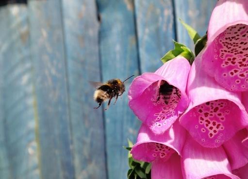 bee close closeup color colour flora flower garden
