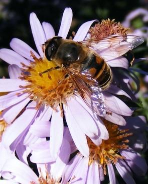 bee flower honey