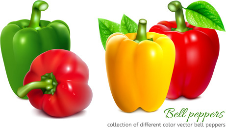 bell peppers colored vector