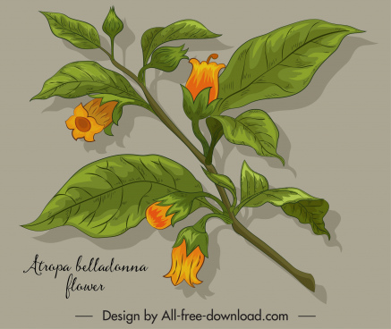 belladonna flower icon blomming sketch colored classic design