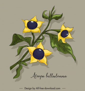 belladonna flower icon colored classical handdrawn sketch
