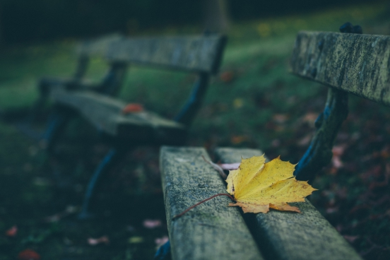dried leaf on wooden bench