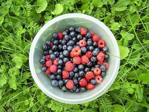 berries wild berries red