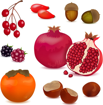 berries with pomegranate vector design