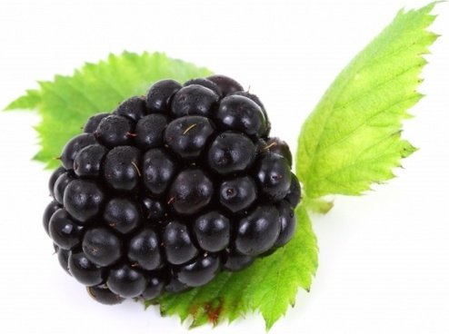 berry black blackberry