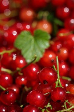berry heaven