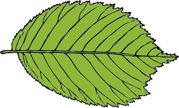 Bi Serrate Leaf clip art