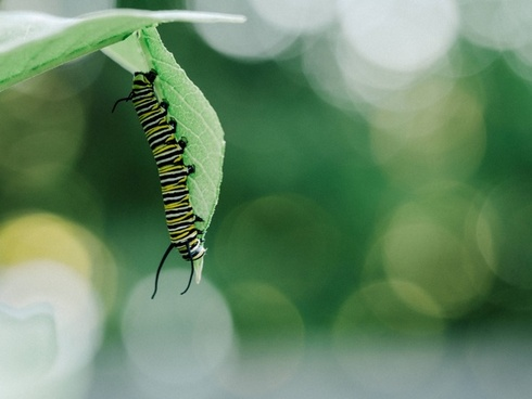 biology blur bug butterfly caterpillar color daytime