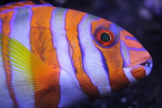 biology bony fish color fish invertebrate love middle