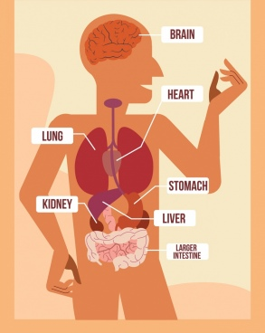 biology science background human body organ icons