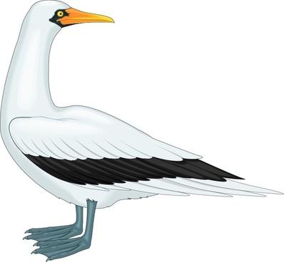 bird 47