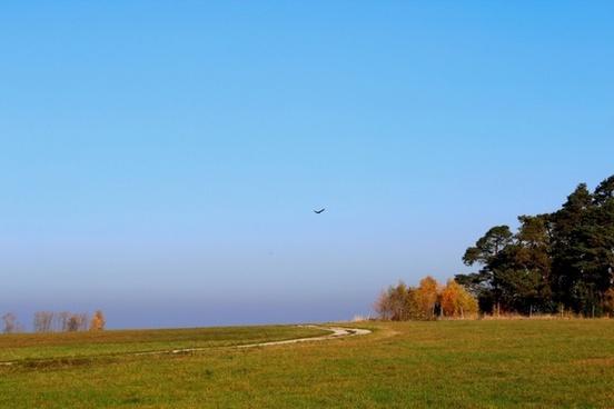 bird adler freedom