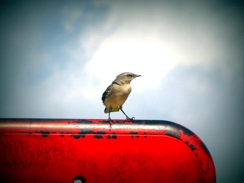 bird animal sky