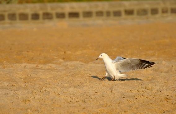 bird beach birds