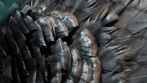 bird bird feather black