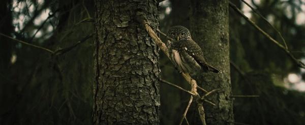 bird bird of prey blur branch camouflage chick