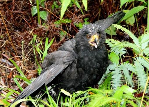 bird birds black bird