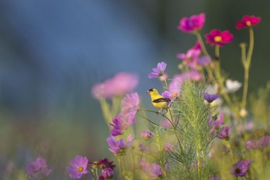 tiny yellow bird in beautiful garden