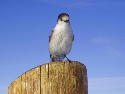 bird feathered animal
