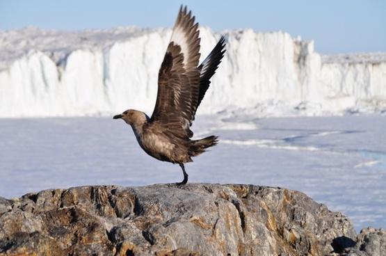 bird flight animal