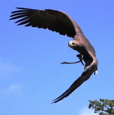bird flight raptor