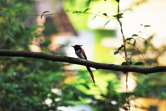 bird goa