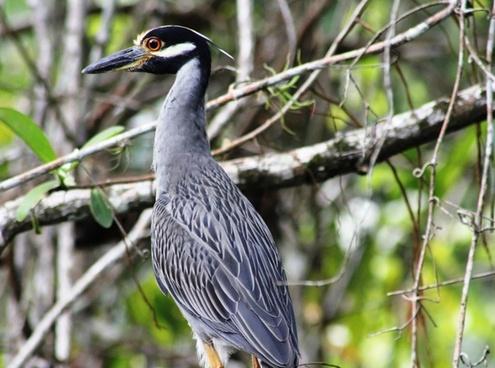 bird honduras jungle