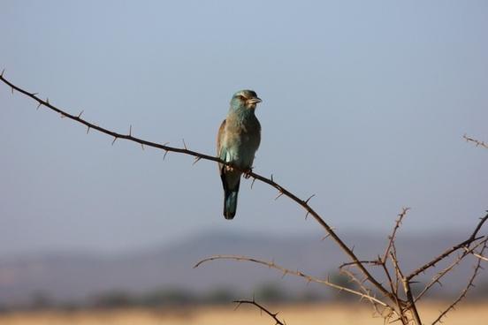 bird kenya an exotic bird