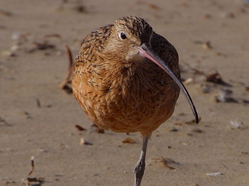 bird long beak stand on one leg