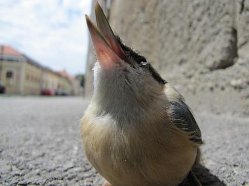 bird macro street
