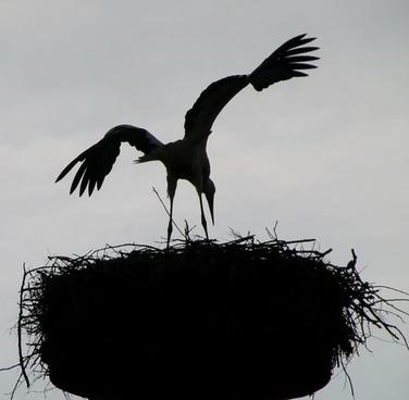 bird nest sky