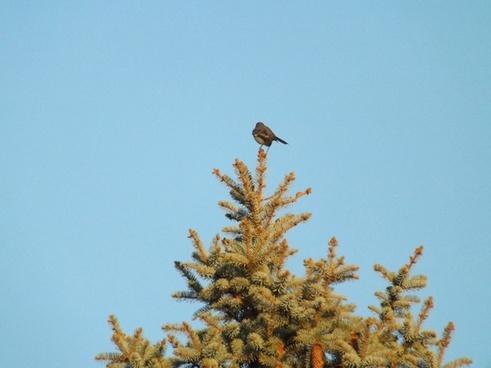 bird on a tree top