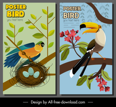 bird poster templates parrot toucan sketch colorful classic