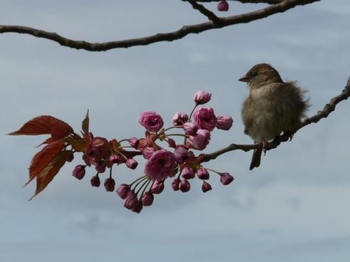 bird road branch