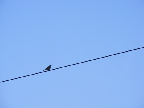bird sitting wire