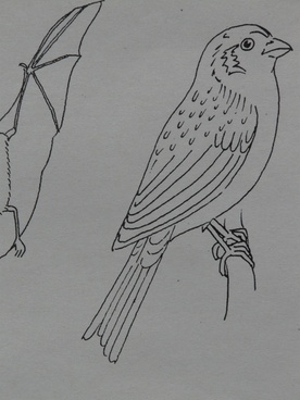 bird sparrow animal