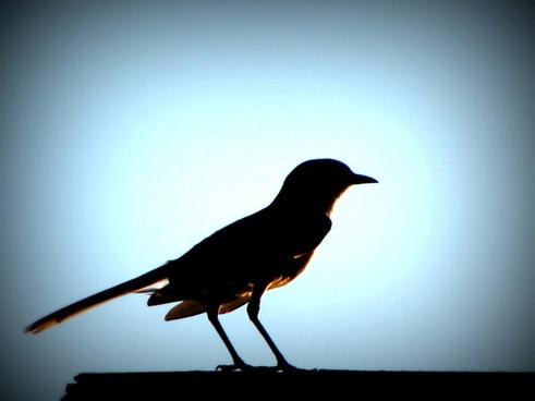 bird sunset glow