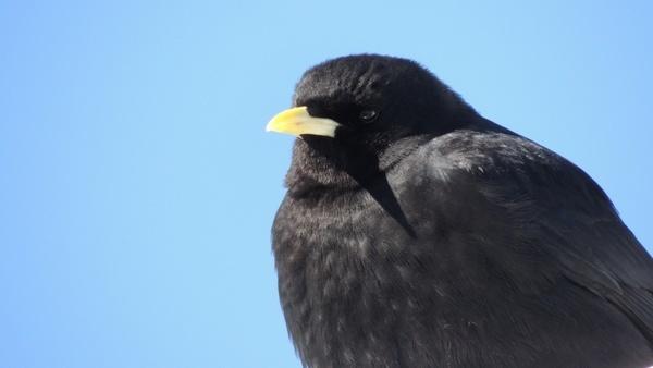 bird termszet thrush