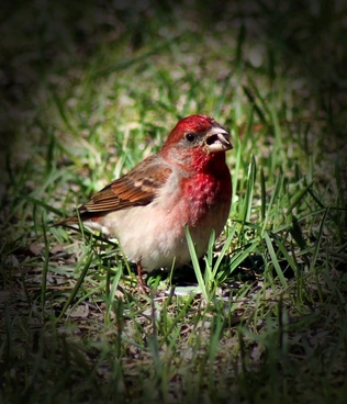 bird wildlife macro